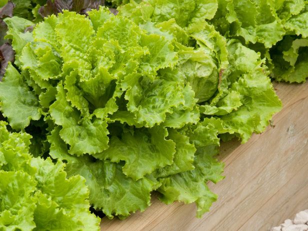 For fresh salad greens on hand whenever you need them, sow cut-and-come-again lettuces on a bright kitchen windowsill with these tips from HGTV Gardens..