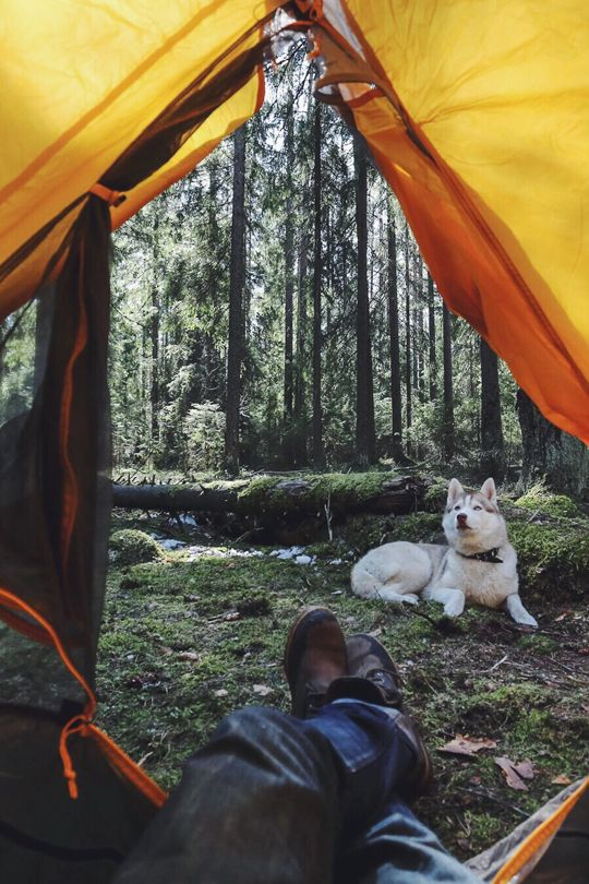 Camping with man's best friend.