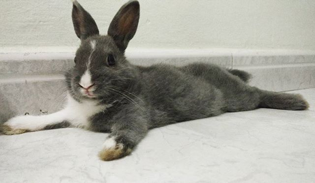 Oh oh! @deechelsee found me  MBR #dwarfrabbit ( very relaxed bunny )