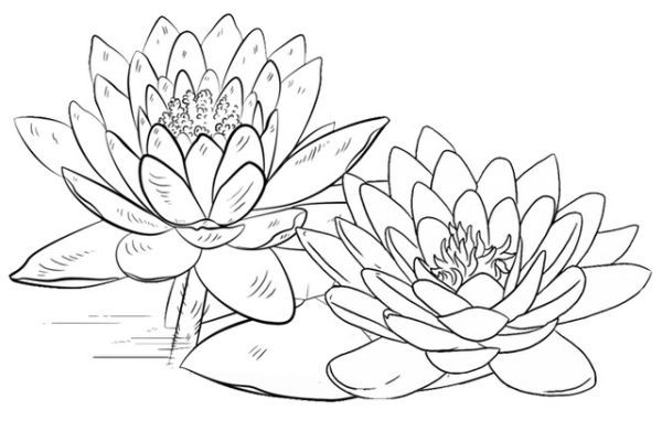 Lotus Coloring Pages Printable Free Coloring Sheets Lotus Flower Colors Leaf Coloring Page Fruit Coloring Pages