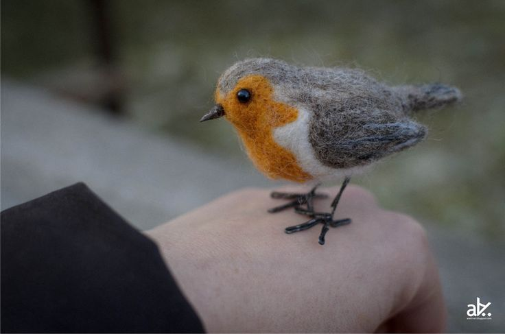 Znalezione obrazy dla zapytania ptaki atlas