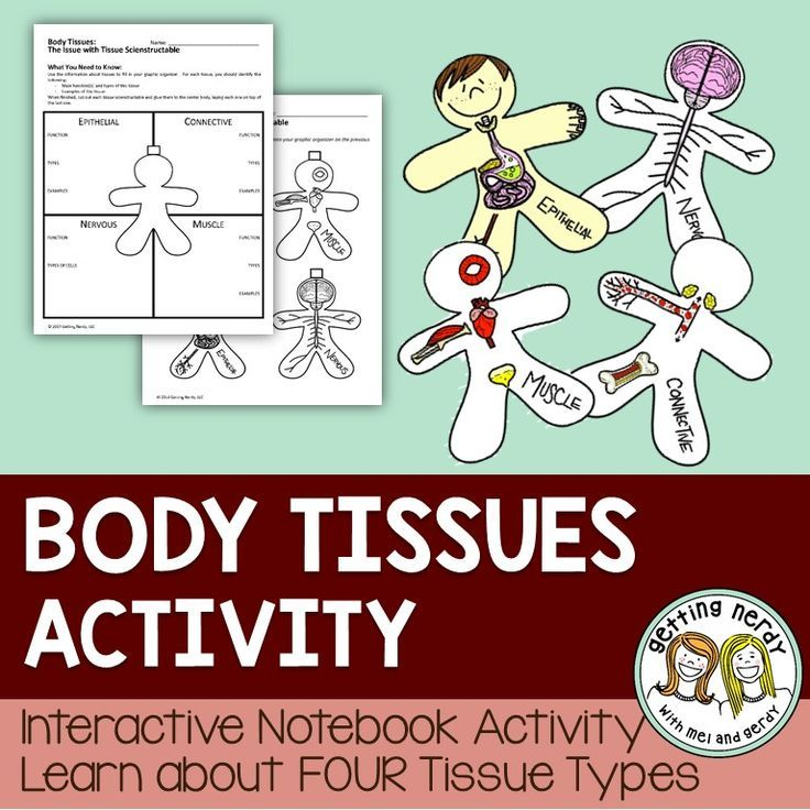 Learn about types of human body tissues with this interactive science notebook activity which includes PowerPoint presentation and The Issue with Tissue Scienstructable. This interactive model ties into our Human Body Bundled Unit as students learn about the four types of tissue located within the human body.