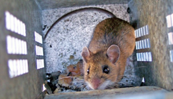13 Best Images About How To Mouse Proof Your House On