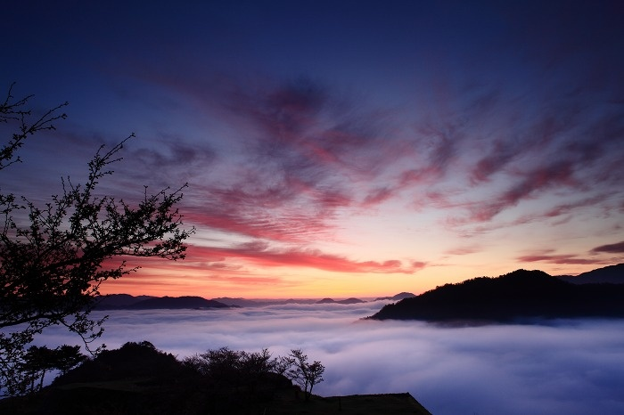 KOBE | Takeda Castle Ruins 2012 桜 : 四季の彩り