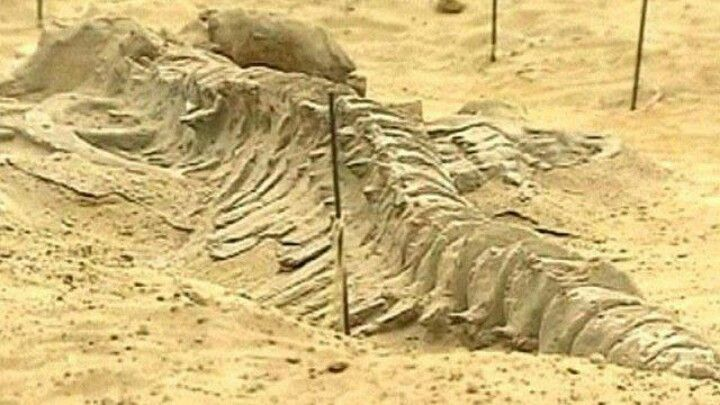 80 Whale remains were found in the desert in Chile, evidence of Noahs flood…