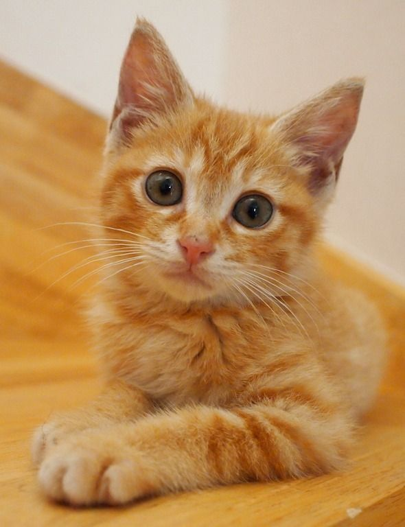 Oh good heavens! How can I get any work done when there are photos of orange tabby kittens to look at? From www.goodmorningkitten.com