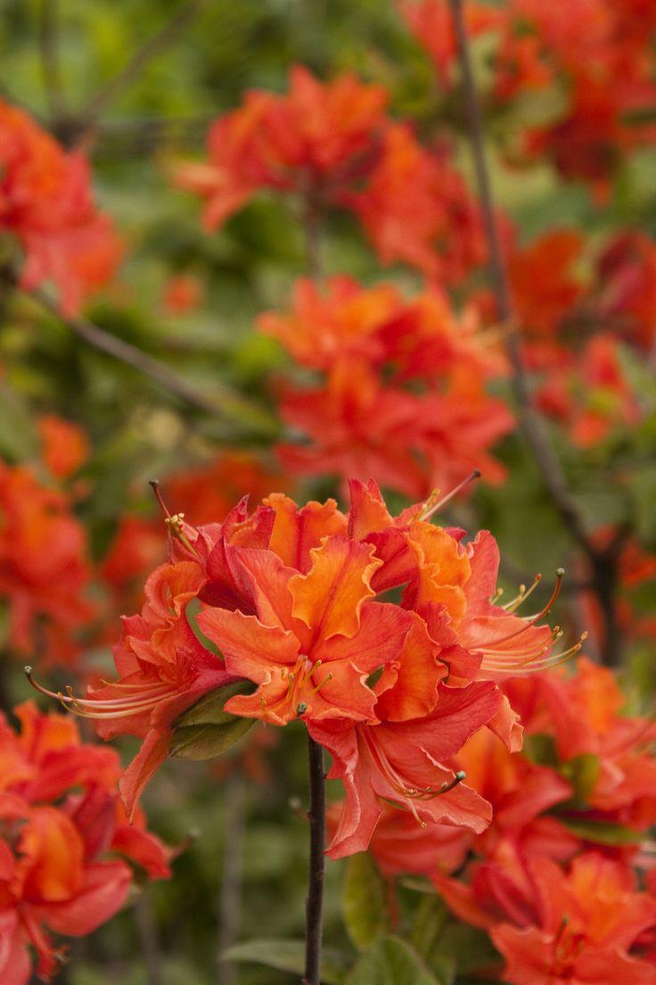 Flower Garden Ideas Wisconsin 315 best plants in linda's garden images on pinterest   flowers