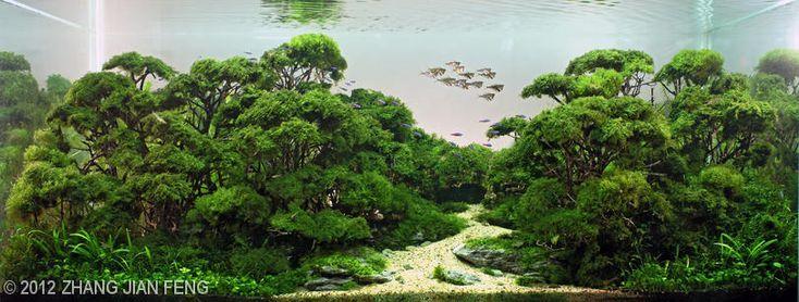 Riccardia chamerdryfolia, Marsilea quadrifolia Linn, Myriophyllum mattogrossense    2012 AGA Aquascaping Contest