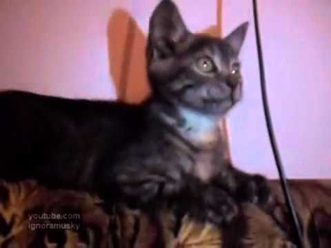 Dancing Kittens make me smile :): I Love Cats, Big Cats, Bob, Cat Loves, Cat Party, Funny Cats, Cat Requires, Funny Cat Videos, Funny Videos