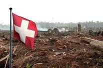 -Verbrannter Wald-Bitte unterschreiben: Den Freihandel mit Palmöl verhindern