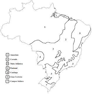 Mapa+de+Biomas+Brasileiros.png (716×729)