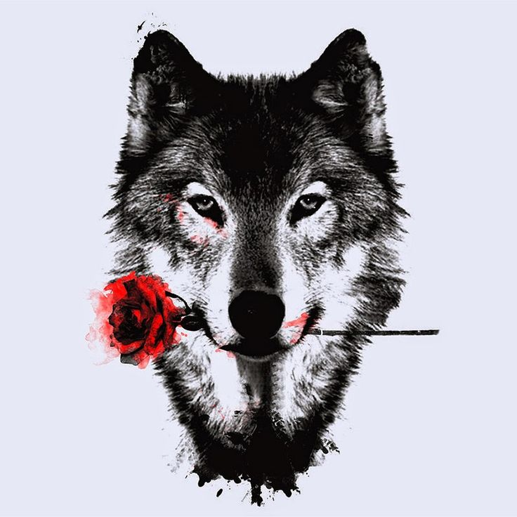 frases de hermann hesse lobo estepario - Buscar con Google