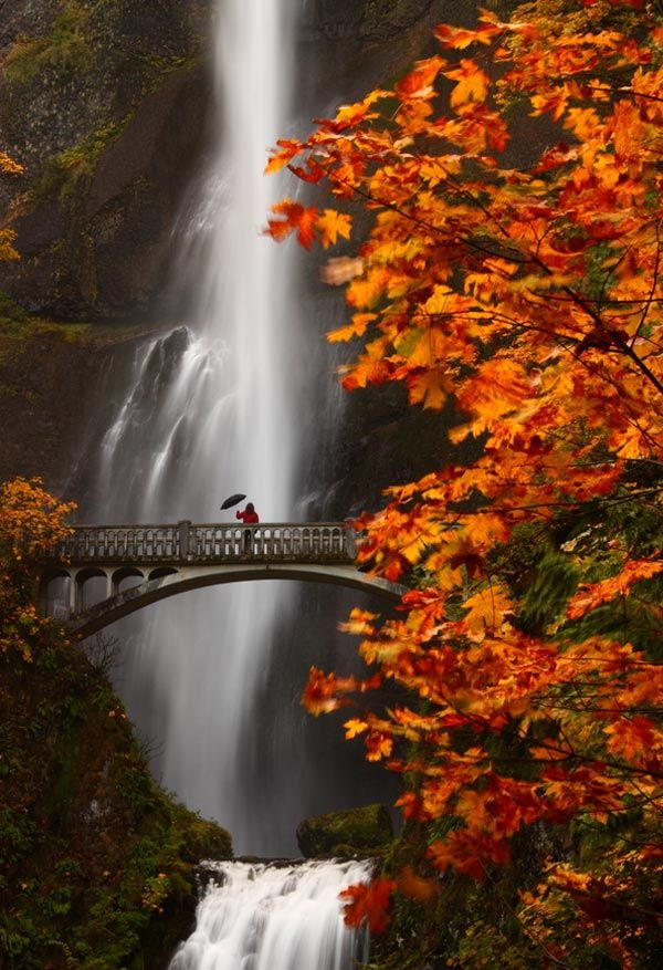 Awesome Locations around the worldBuckets Lists, Nature, Multnomah Falls Oregon, Autumn, Multnomah Fall Oregon, Beautiful Places, Columbia Rivers Gorge, Travel, Bridges