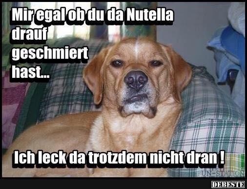 Mir egal ob du da Nutella drauf.. | Lustige Bilder, Sprüche, Witze, echt lustig
