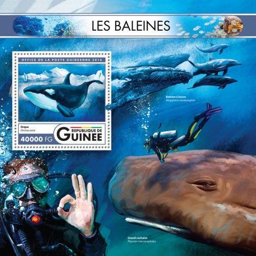 GU16424b Whales (Orc Orcinus orca)