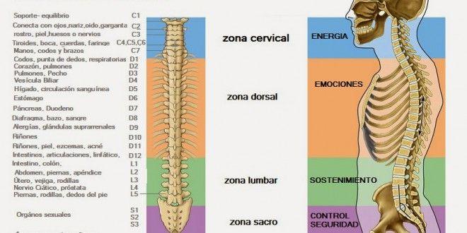 La Parte Superior De La Espalda Corresponde A La Region Del Corazon Y Al Centro Energetico Cardiaco Energy Healing Energy Health