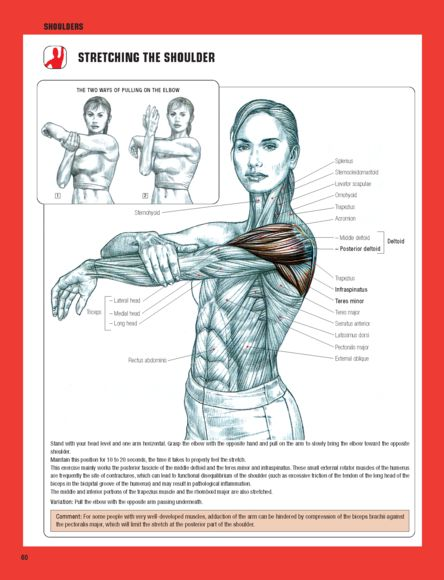 the third edition of strength training anatomy offers the most compelling artwork ever applied. Black Bedroom Furniture Sets. Home Design Ideas