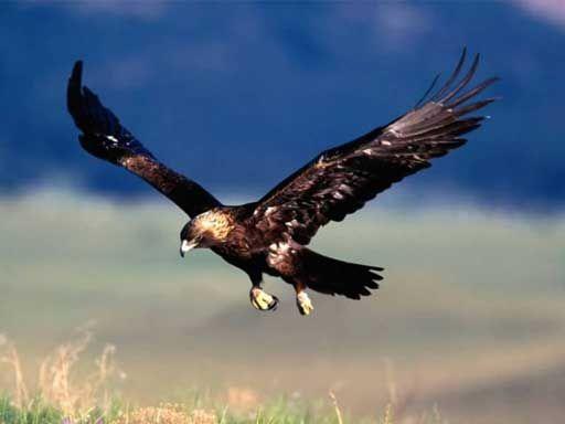 Un aigle enlève un bébé [video] FAKE - http://www.2tout2rien.fr/un-aigle-attaque-un-enfant-video/