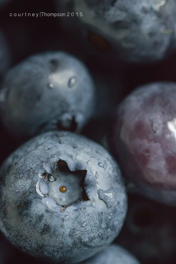 Blueberry macro/food photography by Courtney Thompson