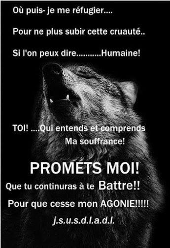 Les loups ont autant leur place que nous les hommes