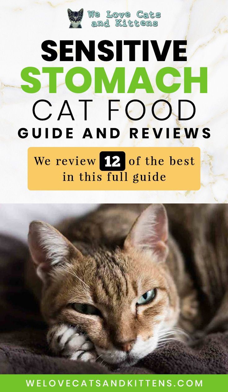 Best Cat Food For Sensitive Stomach Cats Reviews And Cat Food Guide In 2020 Best Cat Food Cat Food Cat Allergies