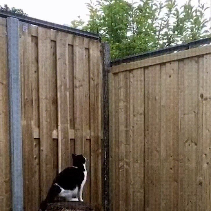 Keeping your cat from escaping the yard : catpranks | Cat ...