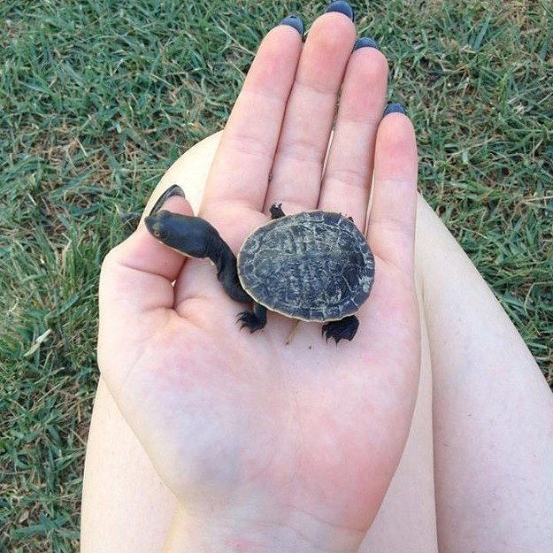 Yurtle The Tiny Long-Necked Turtle. | 25 Selfies With Turtles To Celebrate World Turtle Day