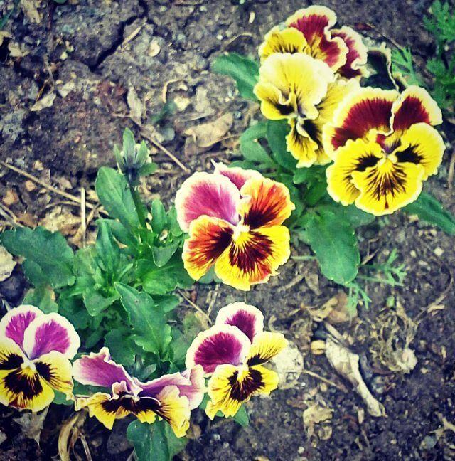 Обожаю май.. все оживает, расцветает, вокруг дурманящие сладкие запахи и яркие цвета!  #природапросыпается #природавгороде #цветымояслабость #flowerslovers #цветет #botanical #flowers #люблювесну #люблюцветы #природавокругнас #веснавгороде #nature #веснакрасна #color #цветение #цветочки #веснапришла #lovenature #природарядом #цвета #цветы http://gelinshop.com/ipost/1520212449449367905/?code=BUY4SsYjllh