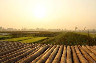 "Amazing Indonesia...! Morning in the Rice Field. Photo location: Buntalan village, Klaten Regency, Central Java, Indonesia. GPS coordinate: 7°43'42""S 110°35'54""E."