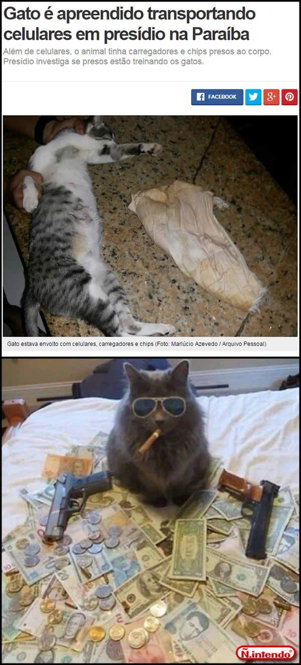 Malditos Gatos!