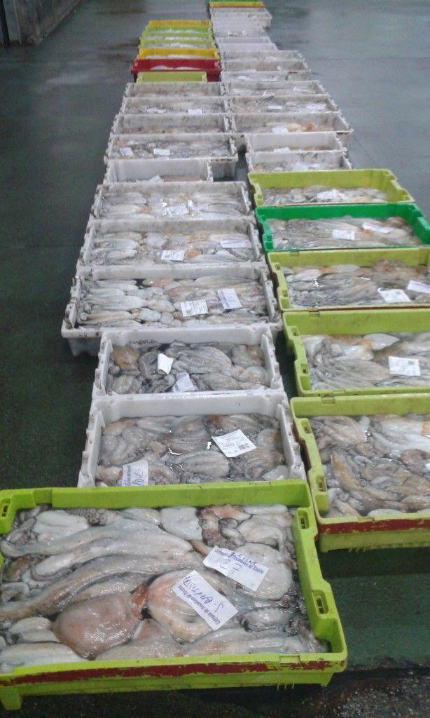 Clasificación del marisco en Ribeira