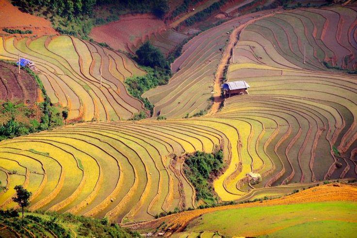 Les rizières au Vietnam : 50 lieux exceptionnels que vous n'avez jamais vus - Linternaute.com Voyager
