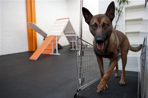 """Dog treadmill sales brisk as pets shape up"" ksl.com (August 14, 2012)"