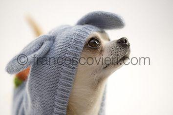 #pets #dog Francesco Vieri ph.