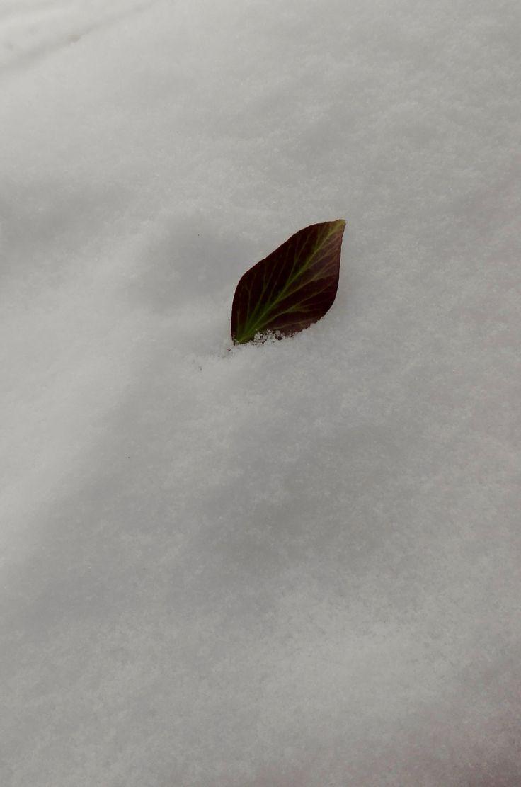 https://www.flickr.com/photos/106936662@N04/shares/T5832Y   Foto di Anna Giulia