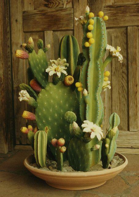 Ceramic Cactus Garden.