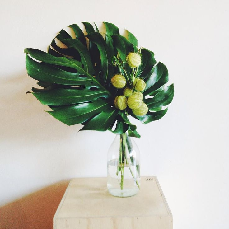 """""""Monstera and swan plant for our friends @truenorth3058 this week! xx #weeklyflowers #weeklyblooms #cafe #styling #florist #coburg #melbourneflorist…"""""""