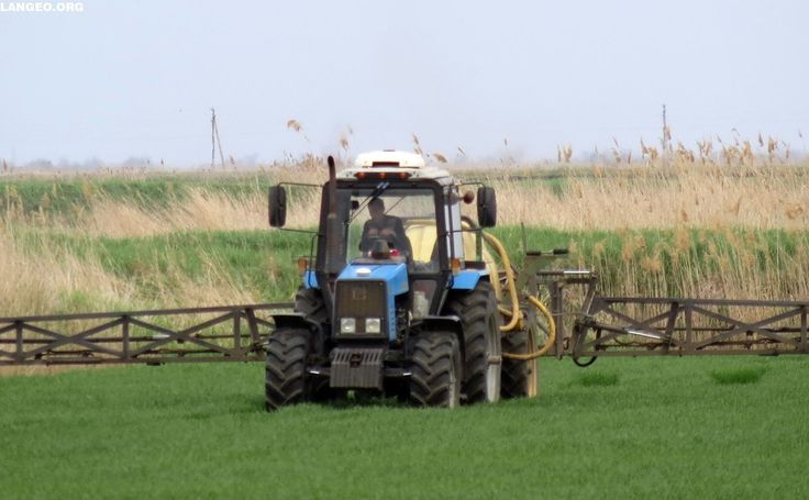 LANGEO.ORG: Рисовые чеки. Rice fields.