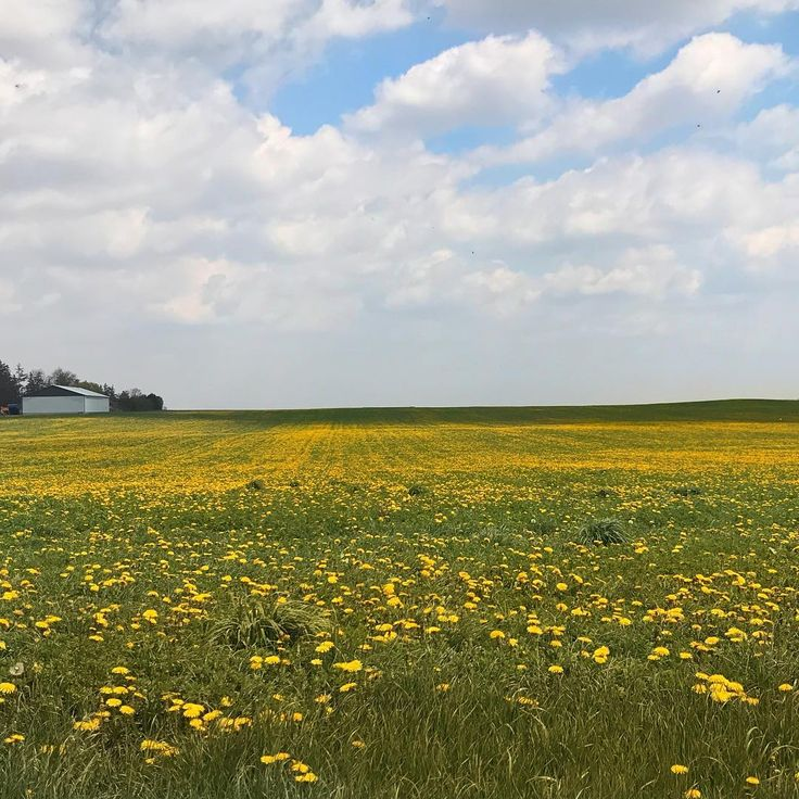 All these signs of #spring have us happy as can be! This photo was snapped on Zenda Line between Woodstock and Tillsonburg