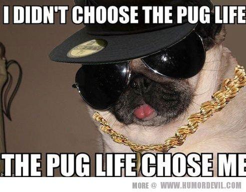pug humor - Google Search