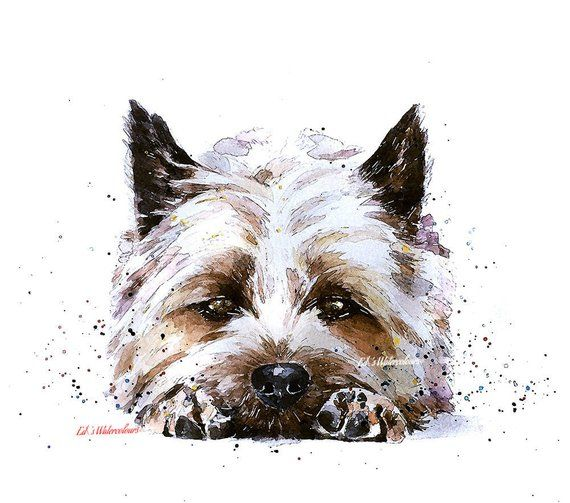 Cairn Terrier 2 Print Watercolour In 2020 Dog Paintings Cairn