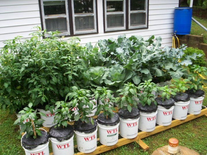 17 Best 1000 images about Bucket Gardening on Pinterest Gardens