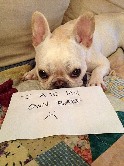 Dogshaming Hall of FameWhat did you do?! The 10 sorriest (and most adorable) canine mug shots from the viral blog