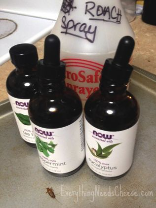 Rid Your House of Roaches ~ Naturally! This Organic Cockroach Repellent Spray will keep your home free of pests. Also works great for spiders! (Peppermint, Eucalyptus, & Tea Tree Essential Oils)