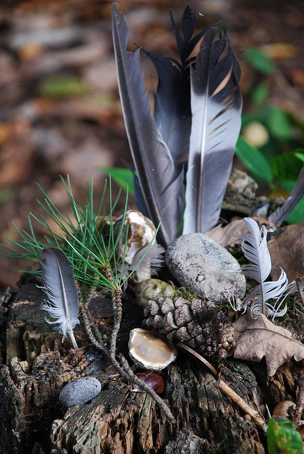 A shaman's altar may include gifts from nature and animals. Feathers, sage, pinecones and more...JW #towardthewithin