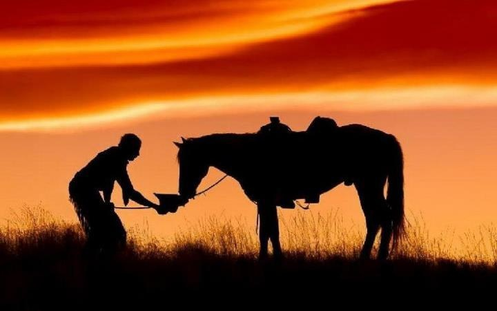 181368_427375137283501_451815424_n: Favorite Places, Beautiful Hors, Art Photography, Silhouette, Horse, Beautiful Photographers, Cowboys Out, Hors Whisperer, Off Talk
