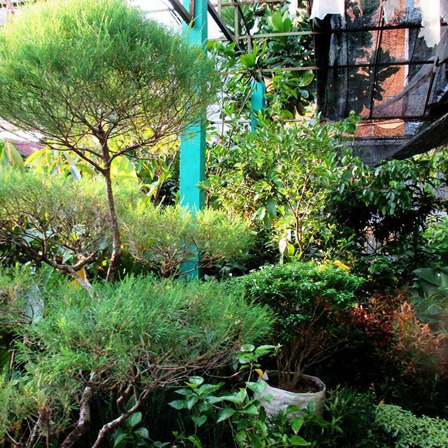 Green Garden by Nicho Lintang #nature #summer #beautiful #love #sun #instagood #cute #sky #blue #sea #sunny #art #life #me #sunshine #vsco #weather #instasummer #instalike #clearsky #petstagram #season #eyes #instagram #hot #bluesky #animal #instadaily #tflers #pink