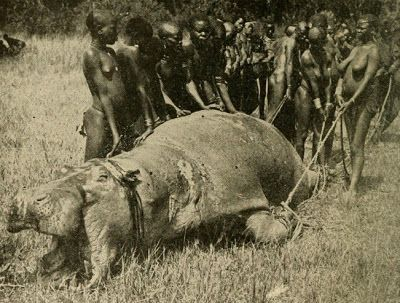 Tangled Roots and Trees: Out of Africa: The Hippopotamus Hunt