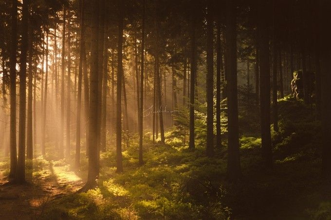 """""""Morningforest"""" by Hud1ai2!  #photography #forest #nature #sunrise #wanderlust #hike #outdoor #trees #wood"""