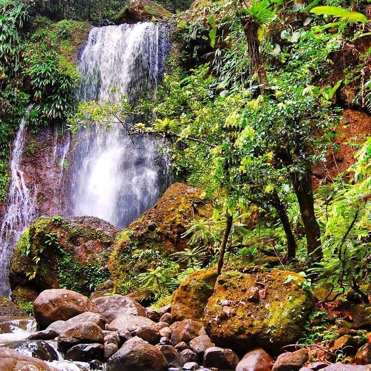 Gorgeous waterfalls nearby ! Gites #mangoplaya in #deshaies, #guadeloupe #caribbean #guadeloupeislands